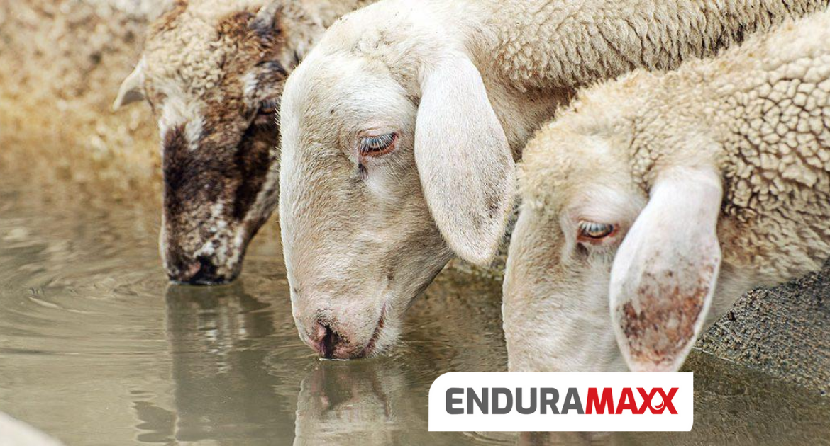 Endurmaxx Water quality in agricultural animal husbandry